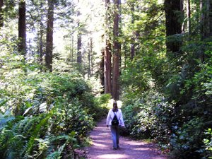WordPress sherpa in the Redwood Forest